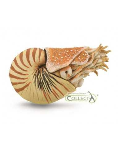CollectA Nautilus Pompilius